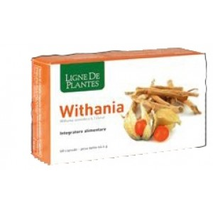 WITHANIA 60 Cps NSE