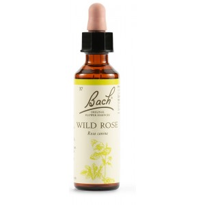 BACH 37 Wild Rose 20ml